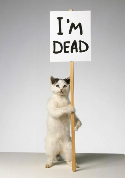 דיוויד שריגלי, ציור פוחלץ של חתול (כלומר חתול מת)