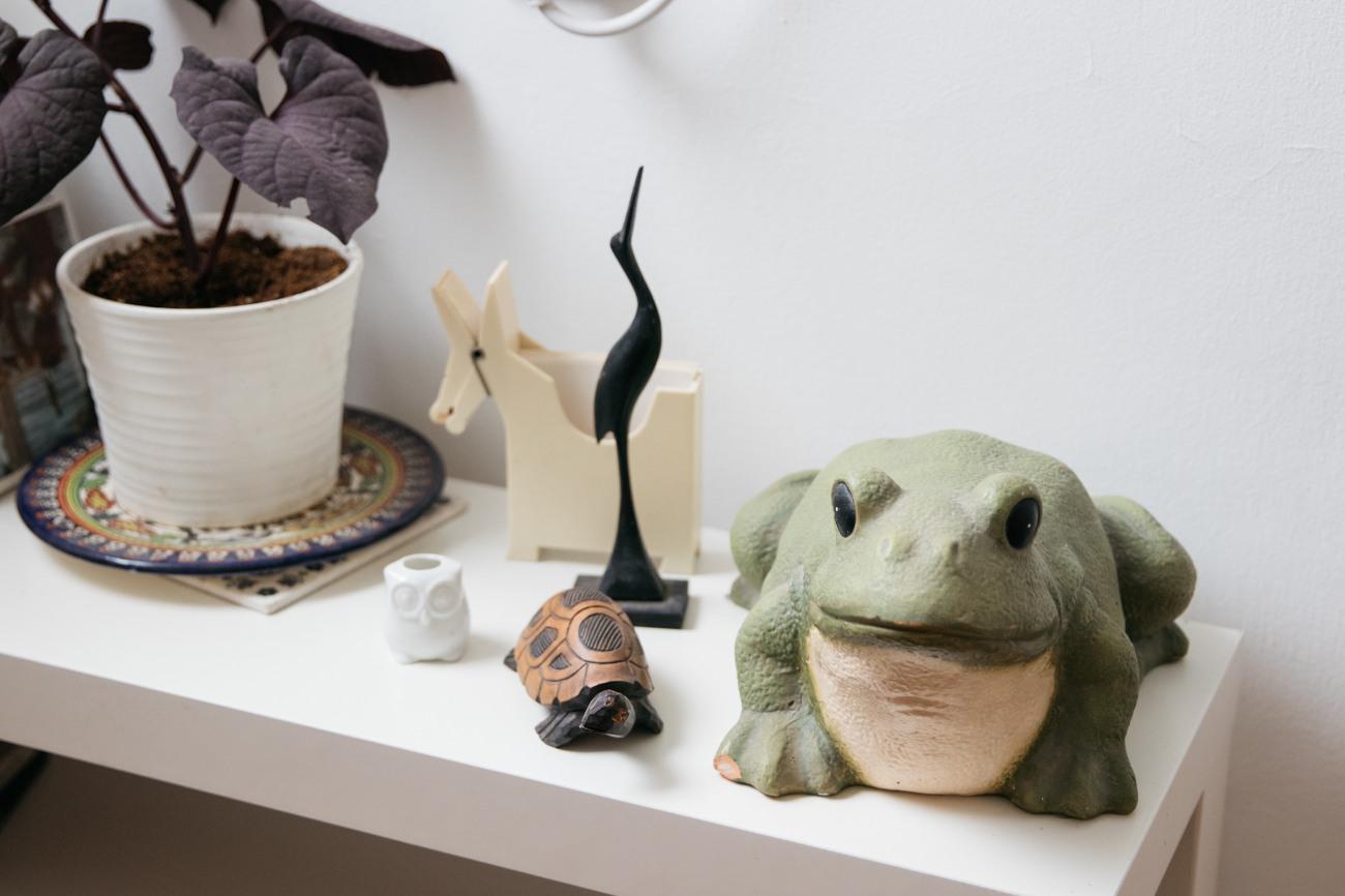חיות: צפרדע, אנפה וצב