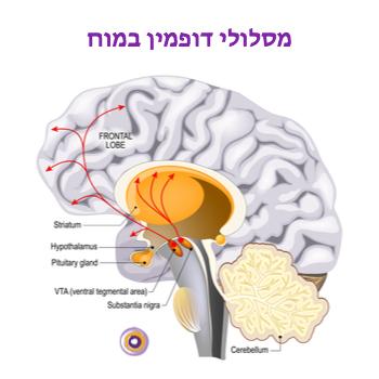 דופאמין במוח