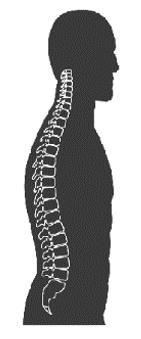איור של עמוד שדרה נייטרלי