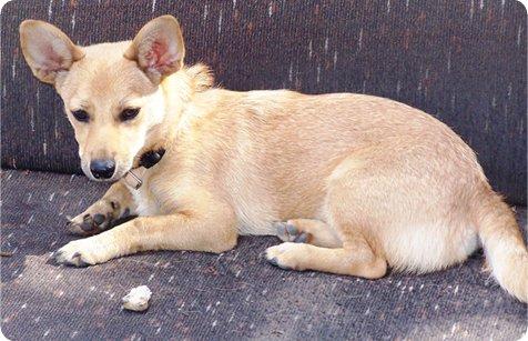 על החיבור בין אוטיזם לבודהיזם בטיפול פסיכולוגי בעזרתו של... כלב