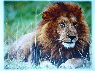 קלפי חיות - החיה ה- zoo היא אני!!